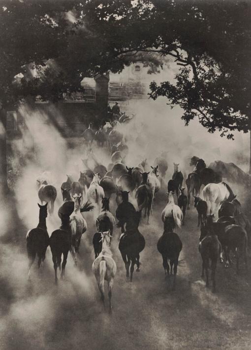 http://shop.berlinbook.com/fotografien-sonstige-motive/gorny-hein-witten-1904-1967-hannover-pferde::11733.html