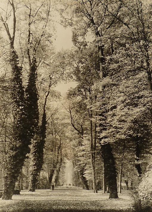 http://shop.berlinbook.com/fotografien-sonstige-motive/baur-max-guenzburg-1898-1988-aschau-sanssouci-hauptallee::8779.html
